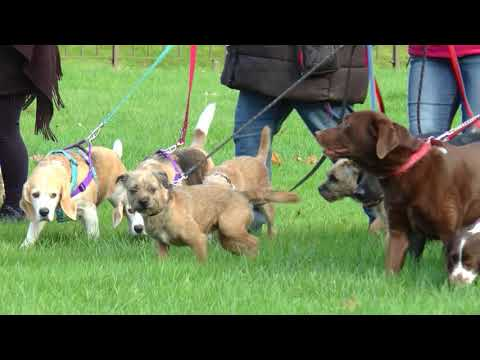 Woof justice - council told to rethink dog walking limit