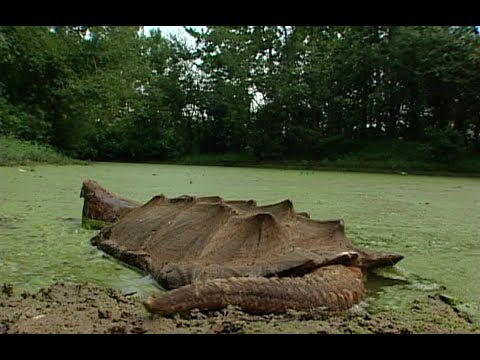 STRANGE Prehistoric Creatures That Still Exist