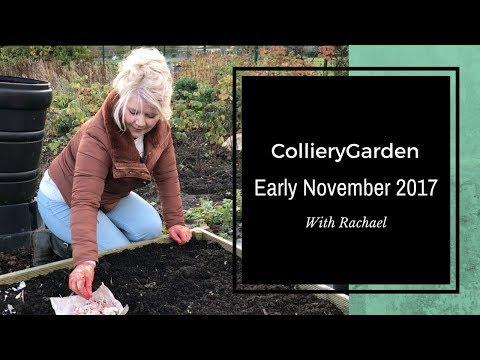 Rachael's Allotment | Planting Autumn Garlic and Clearing Vegetable Bed for Winter