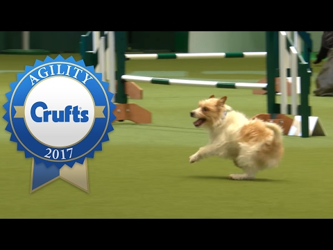 Hilarious Highlights from Rescue Dog Agility | Crufts 2017