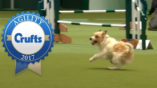 Hilarious Highlights from Rescue Dog Agility   Crufts 2017