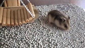 Em Đẹp Nên Em Có Quyền Review Đồ Chơi Mới Zìa - Xích Đu Cho Chuột Hamster