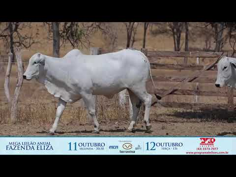 LOTE 197