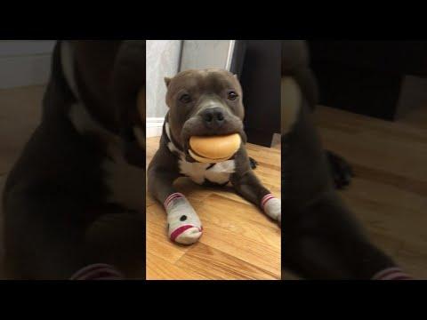 Woodsie Loves Cheeseburgers