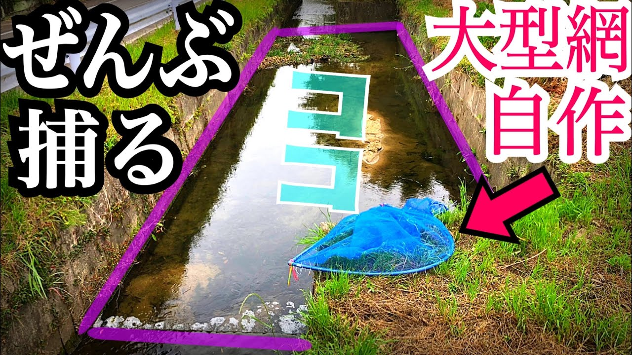 大きな網を作ったので水路の魚全部捕獲する!