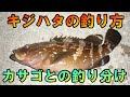 【キジハタ(アコウ釣り)】佐藤文紀さん直伝!キジハタ釣りの基礎から大物キジハタの釣り方!