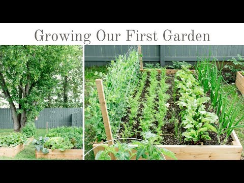 Our First Garden – Raised Vegetable Garden Tour