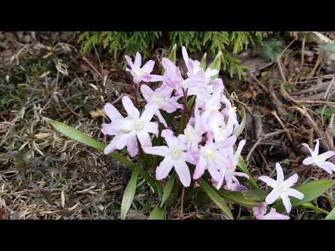 Обзор сада 29.03.20: первоцветы и планы на апрель.
