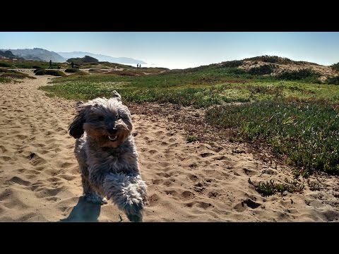 KQED NEWSROOM: SF Homeless, Santa Clara County Jails Report, California Politics, New Rules for Dogs