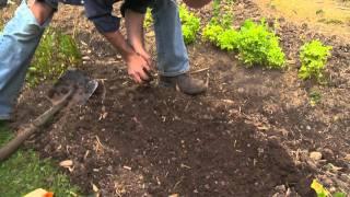 The Shed Online - Planting Rocket