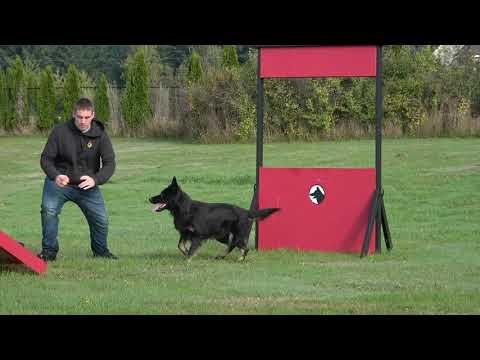 kraftwerk-k9-german-shepherd-dog-obedience-with-superior-speed!