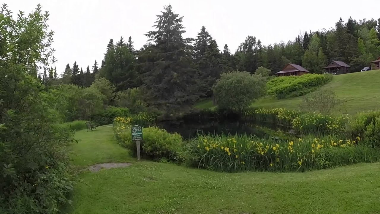 in pines nh cabin cabins the lodge campground pinewood tall nestled rustic rentals