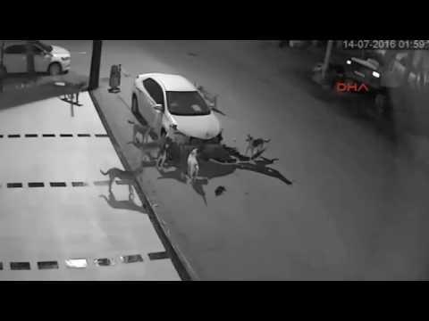Sokak köpekleri SAKARYA DA arabayı parçaladı. Dog Fight Club attack of dog
