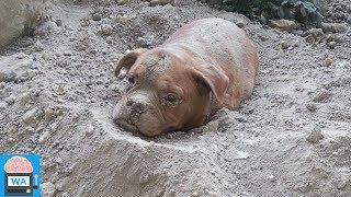 Mann begräbt lebendigen Hund und denkt niemand würde das merken... I Wissensautomat