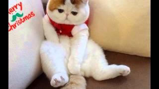 {。^◕‿◕^。} самый няшный японский котик{。^◕‿◕^。}