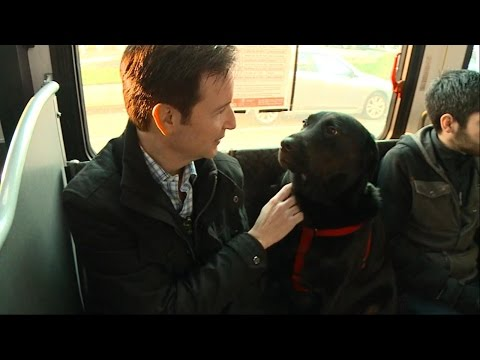 dog-rides-the-bus-solo