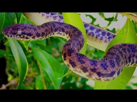 笑える   バイン   地球上のほとんどの毒蛇