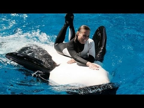 SeaWorld  Trainers in the Water with Killer Whales (The Comp