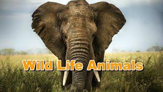 Nat Geo Wild beautiful nature with Amazing animals Documentary National Geographic