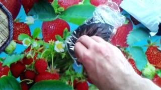 Интимное бельё сетка из Китая