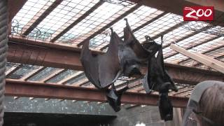 Batting Practice - Zoo Style