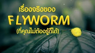 Fact about Fly Worm /  เรื่องจริงของ Flyworm