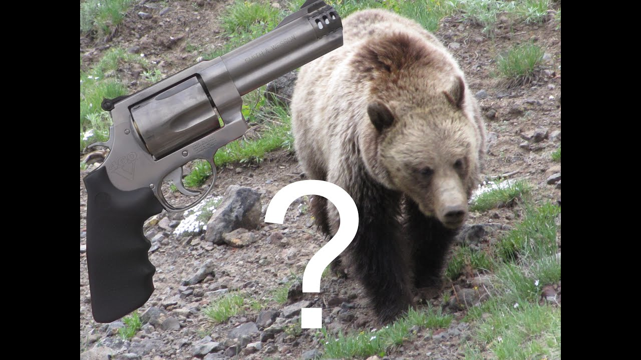 460 sw magnum could you stop a charging bear youtube publicscrutiny Choice Image
