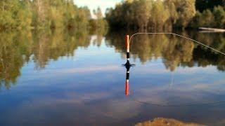 КАРАСЬ СОШЁЛ С УМА Ловля карася на удочку Летняя рыбалка СИБИРИЯ