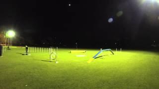 Joondalup Dog Training - Agility