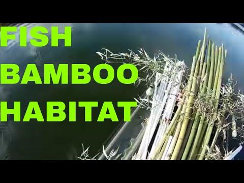 Cam's Crappie Hole **BUILDING  FISH HABITAT!!BAMBOO STEAK BED**
