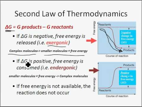 Energy, Enzymes and Metabolism