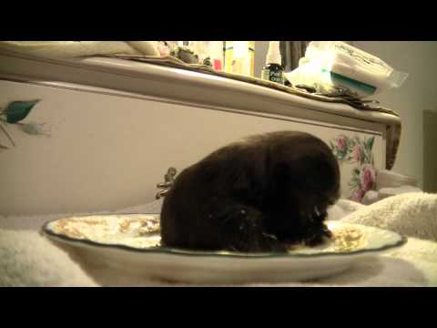 3.5 week old Puppy eating gruel for first time