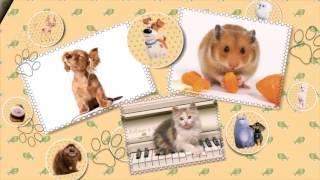 «Тайная жизнь домашних животных» - шаблоны слайд-шоу