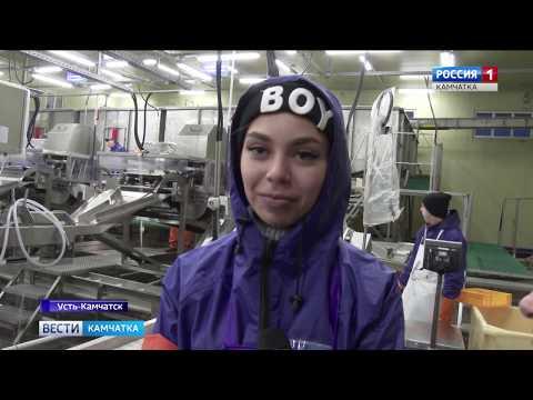Вести-Камчатка: Начало путины - 2019