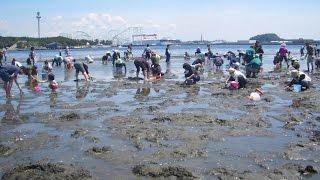 海の公園の広範囲に砂浜を歩き回り、どのあたりが多かったかを説明しま...
