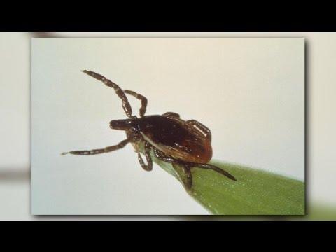 Potentially deadly tick-borne virus spreading