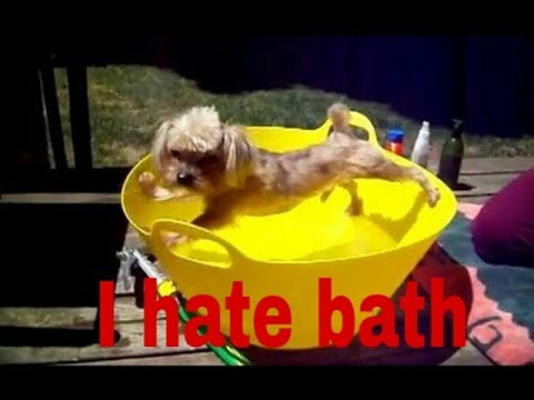 Dog hate bathing  funny complications 2017