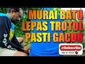 Murai Batu Lepas Trotol Pasti Gacor Bila Di Rawat Dengan Konsisten Tidak Perlu Pakai Doping  Mp3 - Mp4 Download