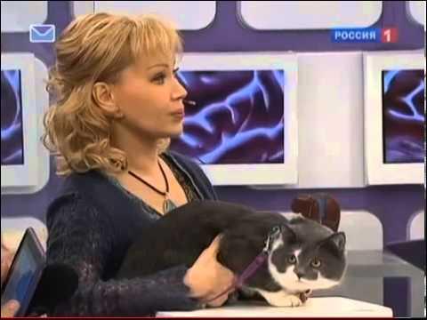Какими опасными последствиями грозит кошачья царапина для человека