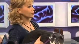 Смотреть видео Болезнь кошачьей царапины