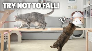 Cat Balance Beam Challenge! Try Not to Fall! | Kittisaurus
