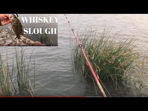 Fishing Whisky Slough..3rd Times A Charm!!! Bass Fishing Using A Texas Rig.