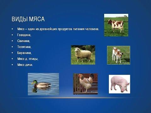 Технология мяса и мясных продуктов - Все для студента
