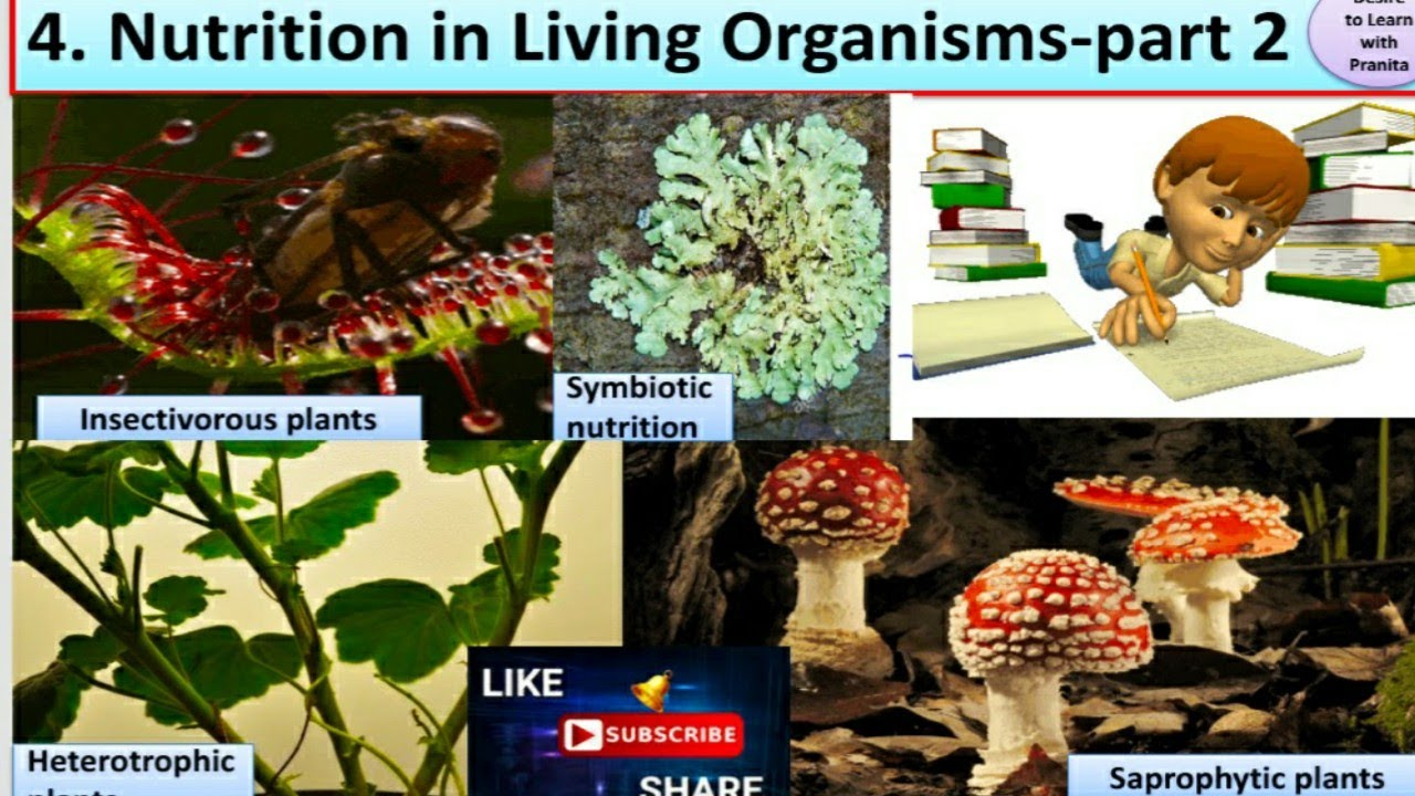 Nutrition in living organisms(part 2) - STD - 7 th ...