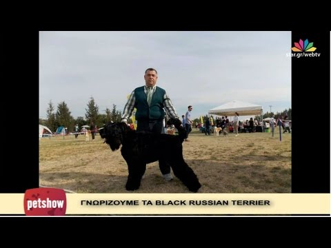"""Pet Show"" - 23.11.2016 -  "" Black Russian Terrier "" - ""κατοικίδια εν δράσει"""