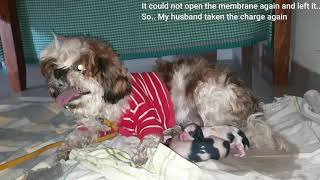 Shocking Surprise | Dog Giving Birth in my HOME | Unexpected Beautiful Memory| Vlog | Sushma Kiron