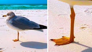 Почему птицы стоят на одной ноге и 28 других популярных фактов из Google