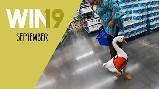 Gambar cover WIN Compilation September 2019 Edition | LwDn x WIHEL