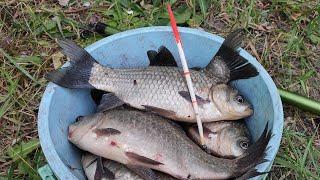Ловля карася ВЕДРО за ЧАС выкладывают ПОПЛАВОК в кувшинках рыбалка летом 2020