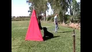 Rottweilers, Schutzhund 1 Routine, Rottweiler Breeders, Www.denalirottweilers.com